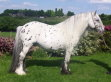 Traditional Spotted Cob